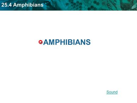 25.4 Amphibians AMPHIBIANS Sound. 25.4 Amphibians KEY CONCEPT Amphibians evolved from lobe-finned fish. LINK Jointed limbs.