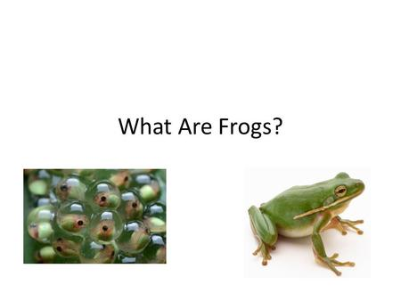 What Are Frogs?.