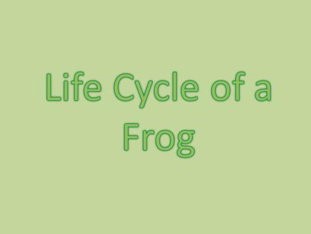 What is a life cycle? Does the baby frog look like the adult frog or do they look different? What are the stages in a frogs life cycle? Put your thinking.