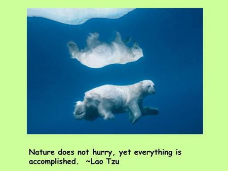 Nature does not hurry, yet everything is accomplished. ~Lao Tzu.