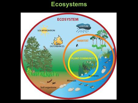 Ecosystems. Primary producers Sun Ecosystems Primary consumers Secondary consumers Primary producers Sun.