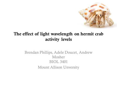 The effect of light wavelength on hermit crab activity levels
