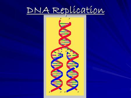 Dna replication review worksheet pdf
