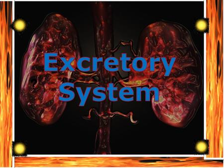 Table of Contents Slide 1. What is the role of the excretory system in the human body: Slide 2. what are the major organs: Slide3: how do theses organs.