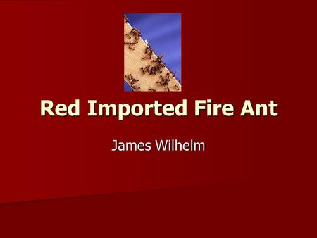 Red Imported Fire Ant Red Imported Fire Ant James Wilhelm.
