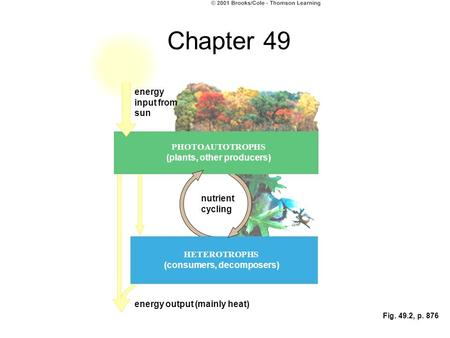 Fig. 49.2, p. 876 energy input from sun nutrient cycling PHOTOAUTOTROPHS (plants, other producers) HETEROTROPHS (consumers, decomposers) energy output.