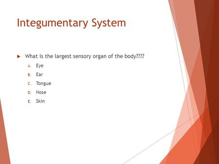 Integumentary System  What is the largest sensory organ of the body???? A. Eye B. Ear C. Tongue D. Nose E. Skin.