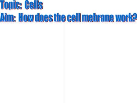 Cell Membrane Also known as the Plasma Membrane Surrounds the cell.