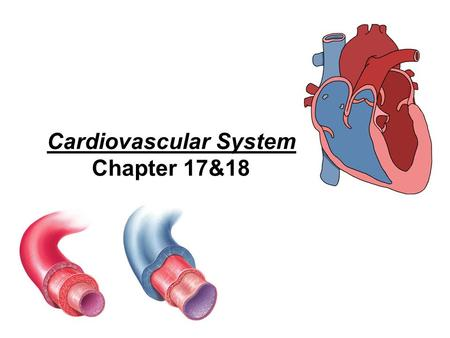 Cardiovascular System Chapter 17&18. Blood Connective tissue composed of fluid, cells, and fragments of cells 1.Plasma: fluid part of blood straw-colored.