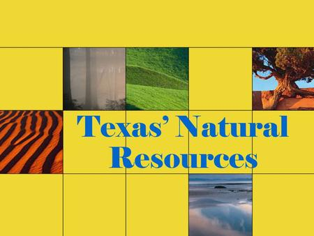 Texas' Natural Resources. Texas contains a number of different landforms and an abundance of natural resources.