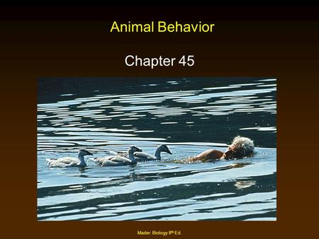 Animal Behavior Chapter 45 Mader: Biology 8th Ed..