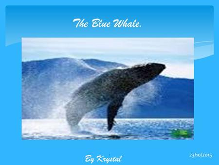The Blue Whale. By Krystal 23/10/2015 1. What they eat. Despite being the largest living mammal in the world the blue whales primary diet consists almost.