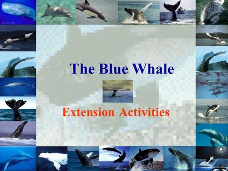 The Blue Whale Extension Activities. Main Menu Activity One: More Facts about the Blue Whale More Facts about the Blue Whale Activity Two: Sing an Eco-tune: