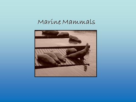 Marine Mammals. The ancestors of marine mammals lived on land.