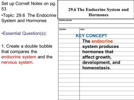 29.6 The Endocrine System and Hormones Set up Cornell Notes on pg. 53 Topic: 29.6 The Endocrine System and Hormones Essential Question(s): 1. Create a.