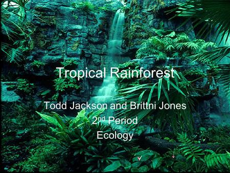 Tropical Rainforest Todd Jackson and Brittni Jones 2 nd Period Ecology.