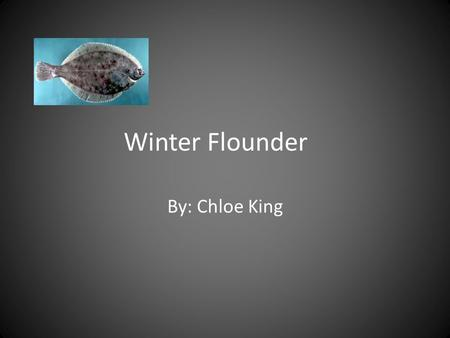 Winter Flounder By: Chloe King. General Information Common Name: Winter Flounder Scientific Name: Pseudopleuronectes americanus Kingdom: Animalia Phylum: