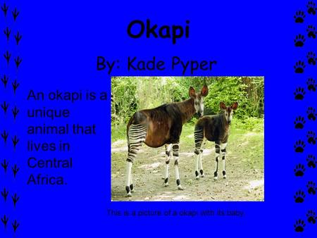 Okapi By: Kade Pyper An okapi is a unique animal that lives in Central Africa. This is a picture of a okapi with its baby.