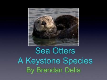 Sea Otters A Keystone Species By Brendan Delia. Basic Info about Sea Otters SCIENTIFIC CLASSIFICATION: Kingdom: Animalia Phylum: Chordata Subphylum: Vertebrata.