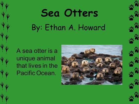 Sea Otters By: Ethan A. Howard