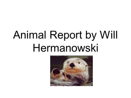 Animal Report by Will Hermanowski. Introduction Did you know a sea otter has more than about 600,000 to 1 million hairs on their body per square inch.
