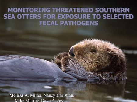 MONITORING THREATENED SOUTHERN SEA OTTERS FOR EXPOSURE TO SELECTED FECAL PATHOGENS Melissa A. Miller, Nancy Christian, Mike Murray, Dave A. Jessup Melissa.