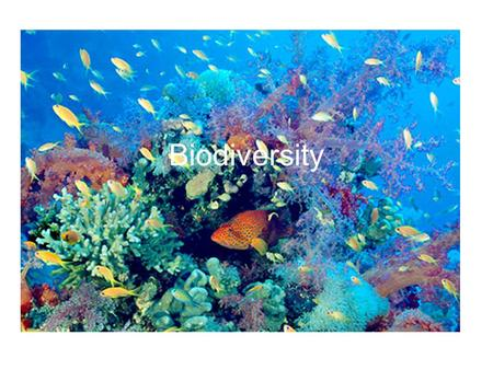 Biodiversity. Definition The number and variety of life forms including species found within a specific region as well as all the number and variety of.
