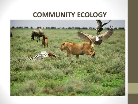 COMMUNITY ECOLOGY. OBJECTIVES: Describe types of relationships among organisms. Compare primary and secondary succession.