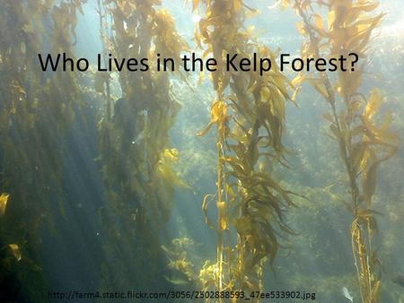 Who Lives in the Kelp Forest?