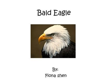 Bald Eagle By: Fiona shen. Characteristics The Bald Eagle is a bird. And it is warm-blooded. Also, it is a vertebrate. They have hollow bones that are.