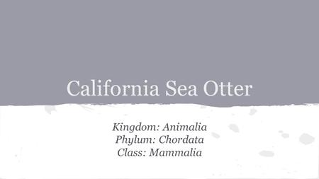 California Sea Otter Kingdom: Animalia Phylum: Chordata Class: Mammalia.
