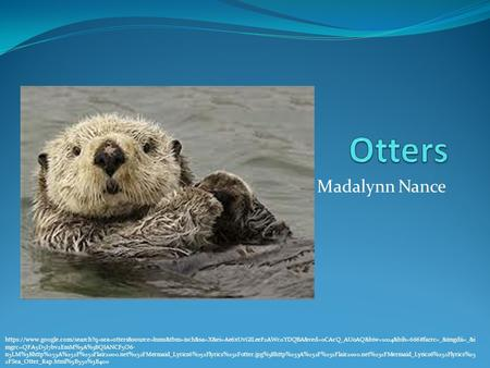 Madalynn Nance https://www.google.com/search?q=sea+otters&source=lnms&tbm=isch&sa=X&ei=Ae6xUvGILeeF2AWc0YDQBA&ved=0CAcQ_AUoAQ&biw=1024&bih=666#facrc=_&imgdii=_&i.