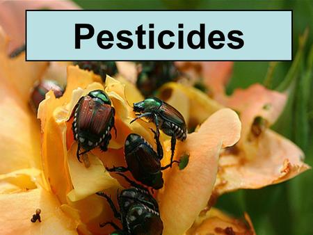 Pesticides. Pests Any organism that: 1.competes with us for food 2.Invades lawns and gardens 3.Destroys wood in houses 4.Spreads disease 5.A nuisance.