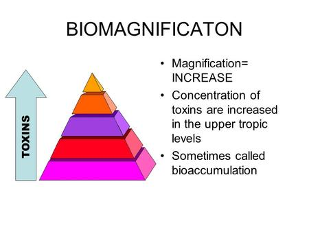 BIOMAGNIFICATON Magnification= INCREASE Concentration of toxins are increased in the upper tropic levels Sometimes called bioaccumulation TOXINS.