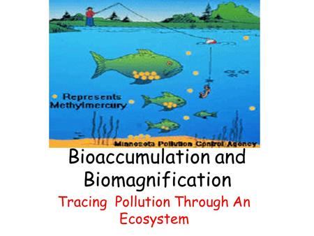 Bioaccumulation and Biomagnification Tracing Pollution Through An Ecosystem.