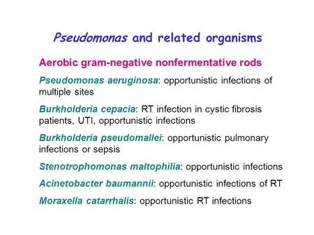 grams staining showing gram negative rods of isolated pseudomonas