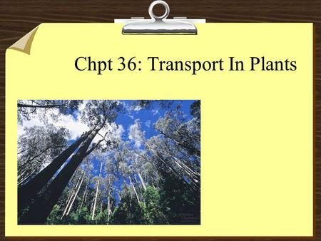 Chpt 36: Transport In Plants. Transport Overview 81- uptake and loss of water and solutes by individual cells (root cells) 82- short-distance transport.