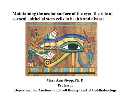 Maintaining the ocular surface of the eye: the role of corneal epithelial stem cells in health and disease Mary Ann Stepp, Ph. D. Professor Department.