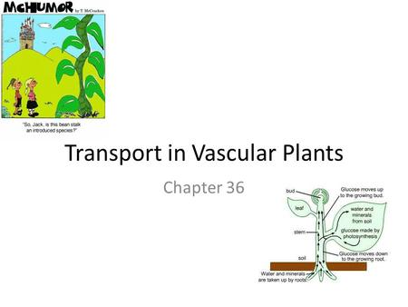 Transport in Vascular Plants Chapter 36. Review: Cell Transport Passive transport: – Diffusion across membrane with concentration gradient, no energy.
