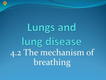 4.2 The mechanism of breathing. Learning outcomes Students should understand the following: The mechanism of breathing. Pulmonary ventilation as the product.