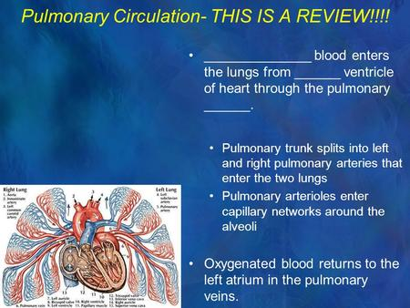Pulmonary Circulation- THIS IS A REVIEW!!!! ______________ blood enters the lungs from ______ ventricle of heart through the pulmonary ______. Pulmonary.