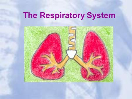 The Respiratory System. The system of the body that deals with breathing The body takes in the oxygen that it needs and removes the carbon dioxide that.