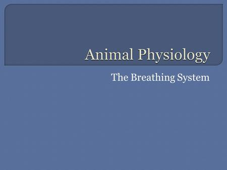 The Breathing System.  Mammals have two large lungs in their thorax.  There are spongy in texture and each have two lobes.  They are positioned behind.