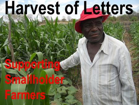 Harvest of Letters Supporting Smallholder Farmers.