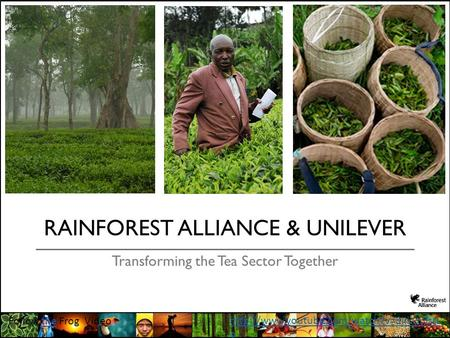 RAINFOREST ALLIANCE & UNILEVER Transforming the Tea Sector Together Follow the Frog Videothe  o.