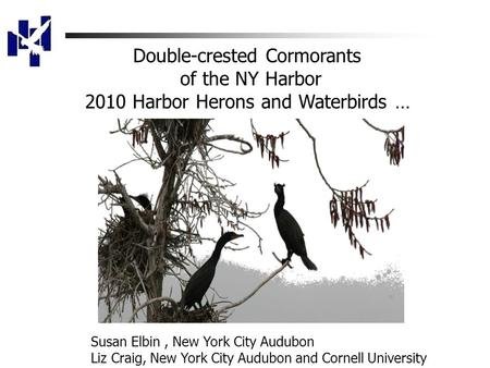 Double-crested Cormorants of the NY Harbor 2010 Harbor Herons and Waterbirds … Susan Elbin, New York City Audubon Liz Craig, New York City Audubon and.