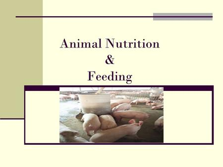 Animal Nutrition & Feeding. Nutrition The process by which animals eat and use food. Proper animal Nutrition 1. Increases feed efficiency 2. Increase.
