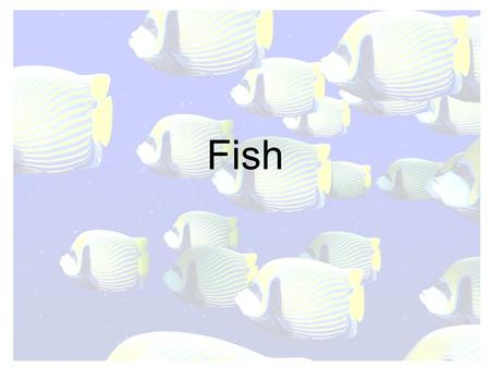 Fish. Characteristics of Fish Skeleton made of bone Air (swim) bladder for buoyancy Mucus to reduce friction, antibacterial agent Gill cover (operculum)