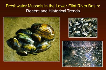 Freshwater Mussels in the Lower Flint River Basin: Recent and Historical Trends.