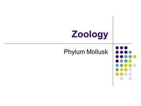 Zoology Phylum Mollusk. I. Intro to Mollusks A. Mollusk  soft bodied B. 2 nd largest phyla 1. small  large 2. fast movers  slow movers 3. intelligent.